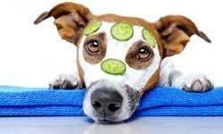 Tierpflege & Hygiene