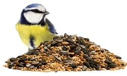 Saaten für Vögel